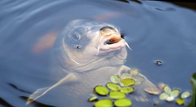 gdzie tanio kupic ryby - żywego karpia na świeta Wrocław