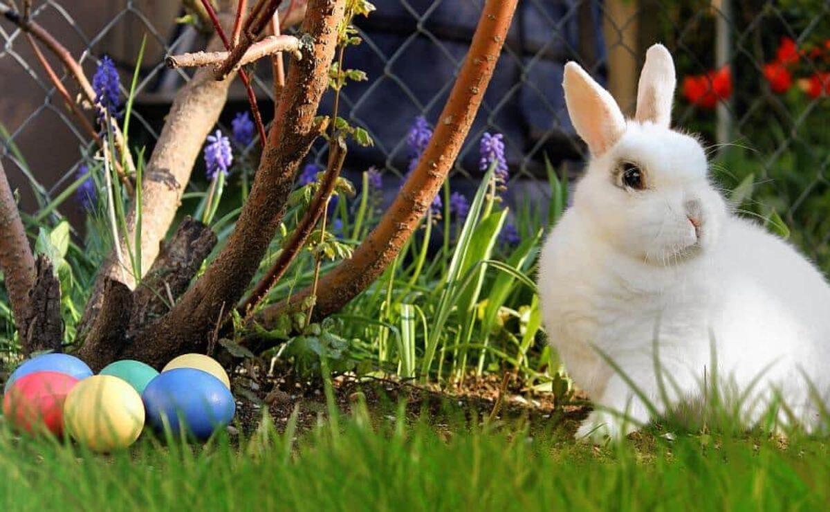 Kiedy Sa Swieta Wielkanocne W 2019 Godziny Otwarcia Sklepow W Wielkanoc We Wroclawiu Biedronka Lidl Tesco Auchan Zabka I Inne Naszwroclaw Net