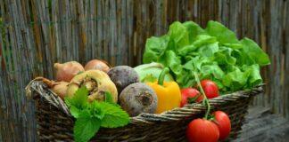 ogrody społeczne wrocław ogrodki działkowe uprawa warzyw